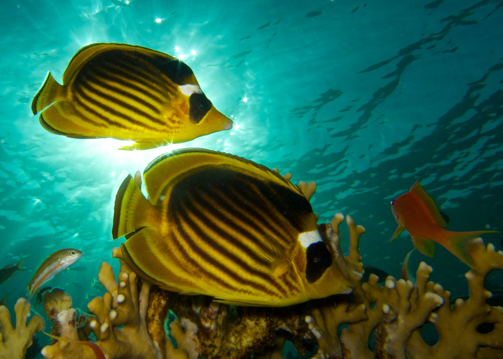 Underwater Photography - Diving Specialty