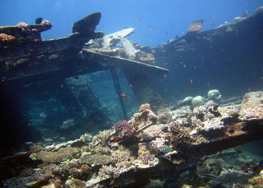Wreck - Diving Specialty
