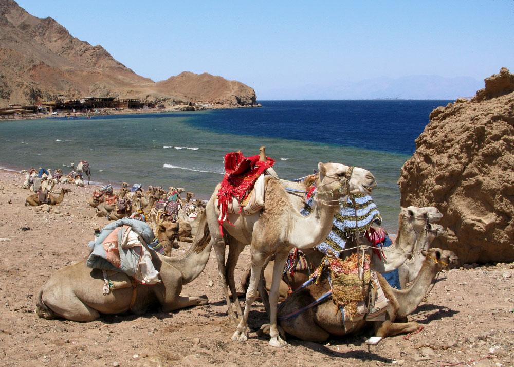 Diving camel safaris, a unique Dahab experience